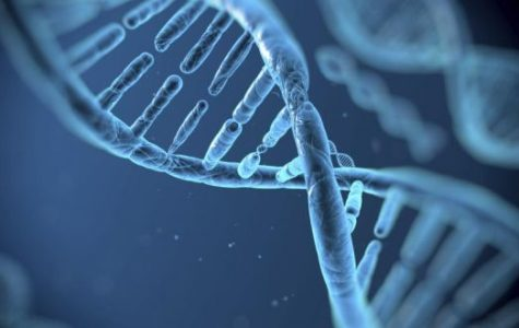 CRISPR: A possible cure to humanities most deadly diseases