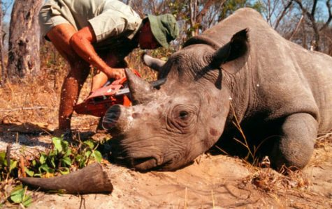 Ebay, Etsy and others come together to stop online wildlife trafficking