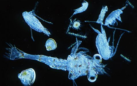 Primary gene for producing marine molecule discovered…and it has HUGE environmental impacts