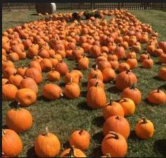 Fun Fall Festivities