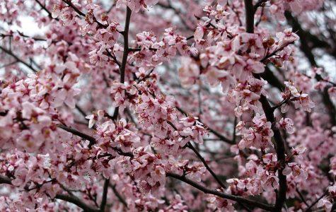 A Smile as Sweet as Spring