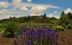 Eager for Arboretum Trips