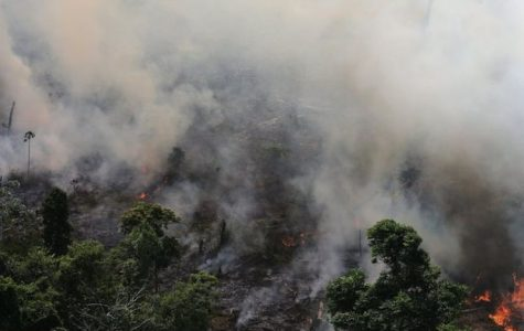 The Amazon Forest is on fire