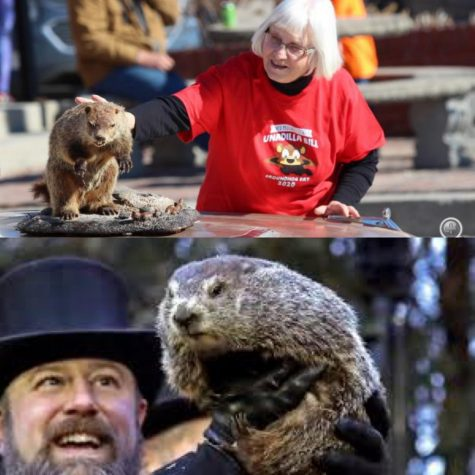 Unadilla Bill (top) and Punxsutawney Phil (bottom)